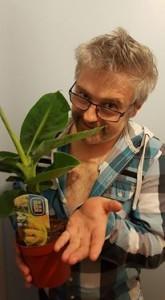 Jak uprawiam banany w domu